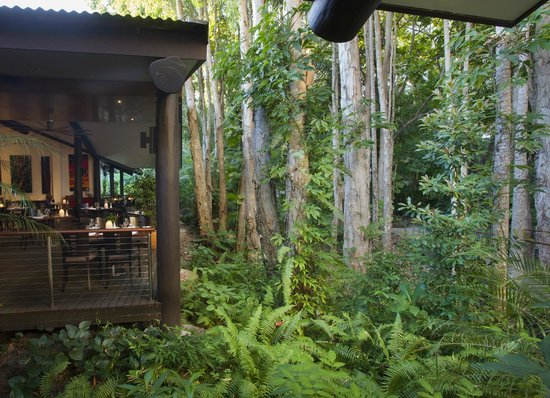 Kewarra Beach Resort & Spa : View from the bar into the Paperbark forest