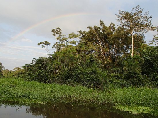 Manatee Amazon Explorer: Rainbow over the river and jungle