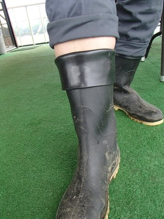 Manatee Amazon Explorer: Cuff the rubber boots to fit larger calves