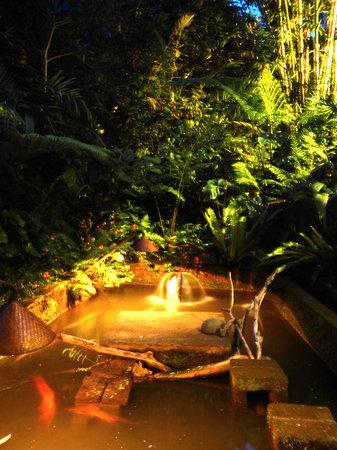 Sarinbuana Eco Lodge: night pond