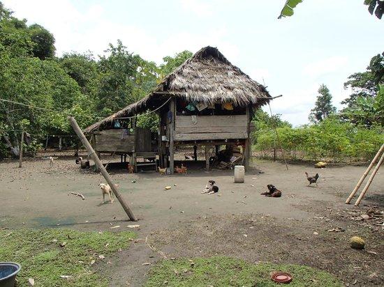 Manatee Amazon Explorer: Home of Amazonian family