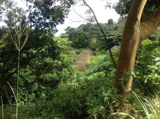 Cot Trail: garden