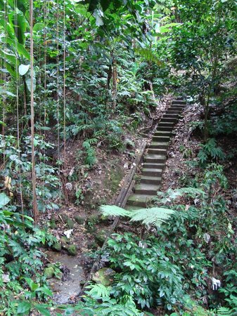 Cot Trail: steps to the spring