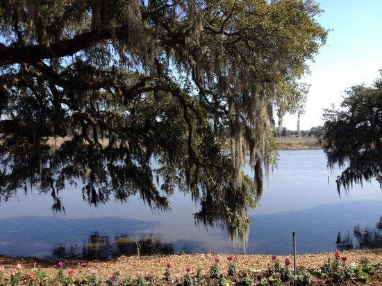 Magnolia Plantation & Gardens: Magnolia Plantation