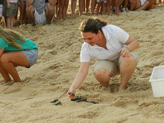 Tivoli Ecoresort Praia do Forte : Projeto Tamar