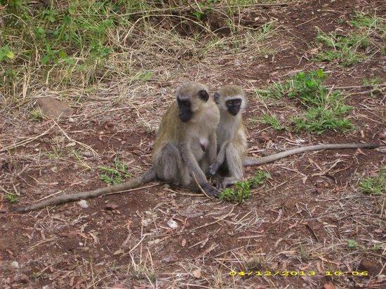Lake Manyara Serena Lodge: Some locals