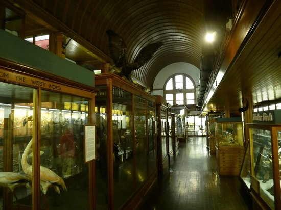Fairbanks Museum and Planetarium : Down the right aisle