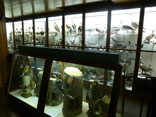 Fairbanks Museum and Planetarium : Bird display cases