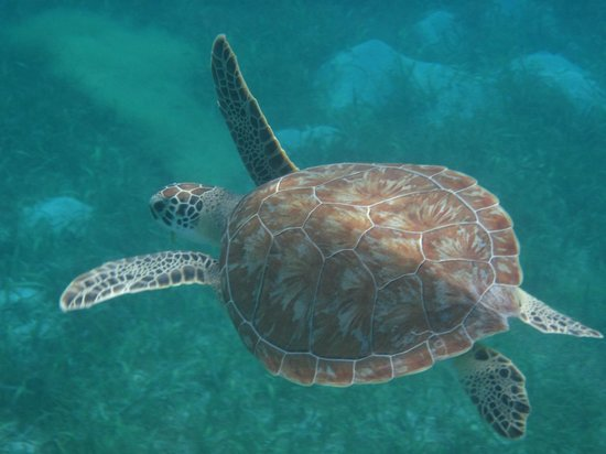 Hotel on the Cay: Sea Turtle