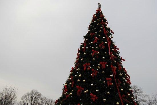 Cincinnati Zoo & Botanical Garden : A look of the 35' christmas tree. PNC Festival of Lights