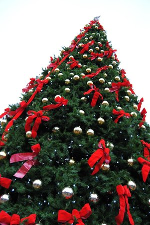 Cincinnati Zoo & Botanical Garden: A look of the 35' christmas tree. PNC Festival of Lights