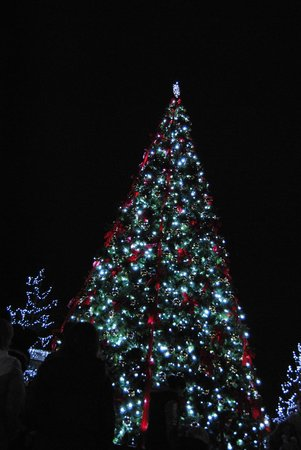 Cincinnati Zoo & Botanical Garden : A look of the 35' christmas tree at night. PNC Festival of Lights