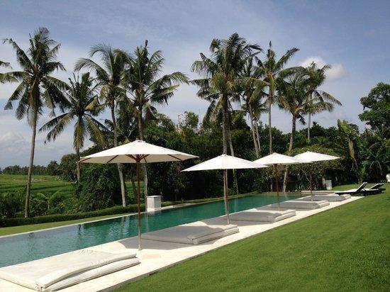 Villa Infinity Bali : Villa Infinity pool