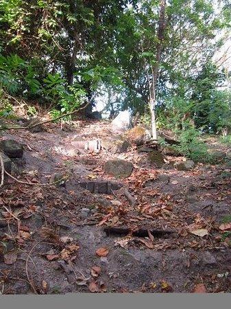 "David's Trek: The ""path"" near the village"