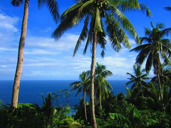 Apo Island, Philippines: Coconut trees all around