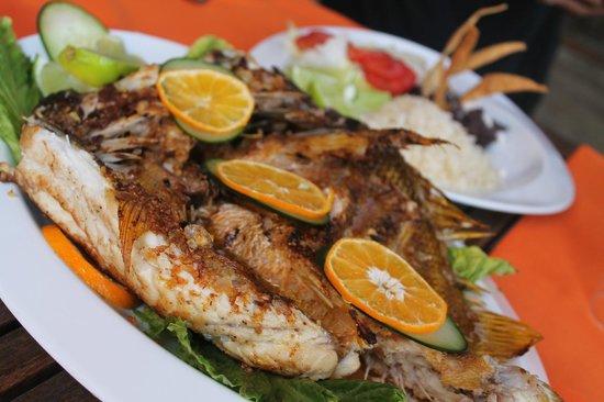 Koox Matan Ka'an Hotel: Pesca del día en el Quinto Sole, ¡ delicioso !!