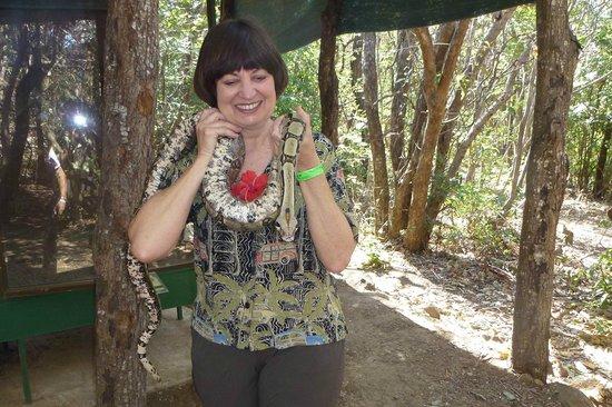Hacienda Guachipelin : Friendly Boa