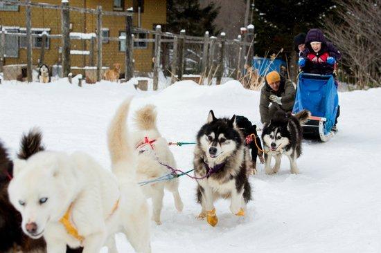 Donkoro Outdoor School: Dog Sled 2