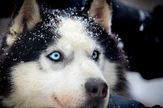 Donkoro Outdoor School: Good dog 2
