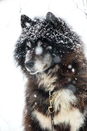 Donkoro Outdoor School: Good dog 1