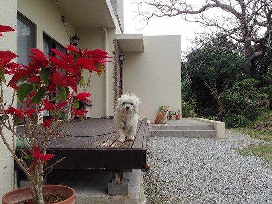 Sendan: dog