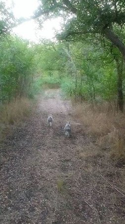 Decker Creek Bed & Breakfast & Biscuit : My dogs enjoy being able to hike off-leash