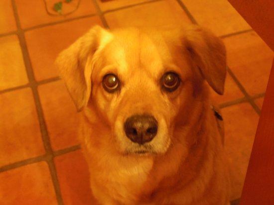 Sedona Bear Lodge: host's dog