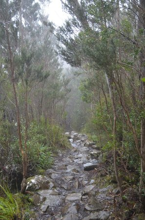 Mount Wellington (2)