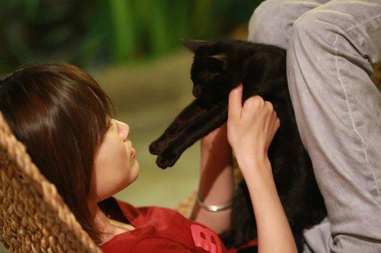 Chiang Mai Summer Resort: 吊床上休息时会有小猫跳到你的肚子上哈哈