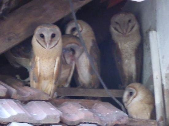 Our Land Island Backwater Resort: The Barn Owls