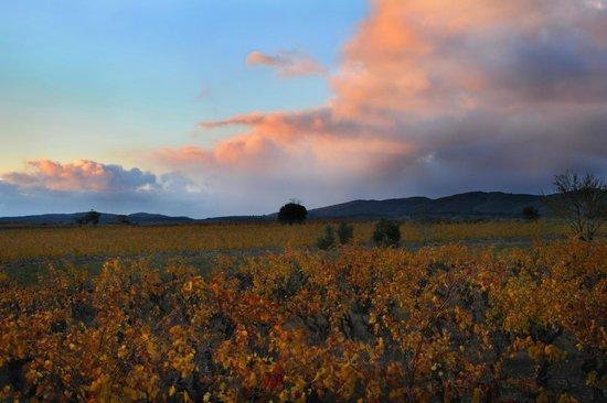 Vignobles Dom Brial : Vignoble