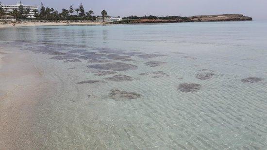 Nissi Beach Resort: amazing crystal clear beach