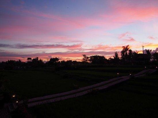Kama Bisma Cottage : evening sky over the rice paddies
