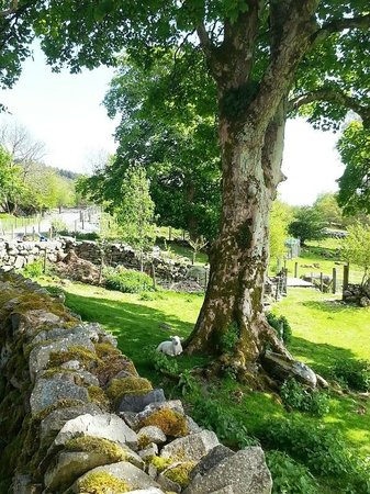 Cae Gwyn Farm and Nature Reserve : the farm