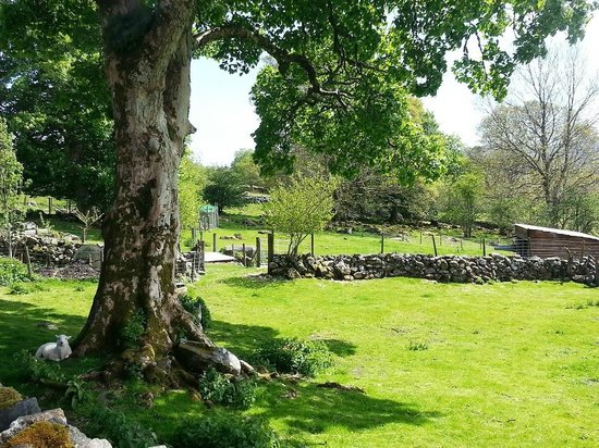 Cae Gwyn Farm and Nature Reserve: farm in glorious sunshine