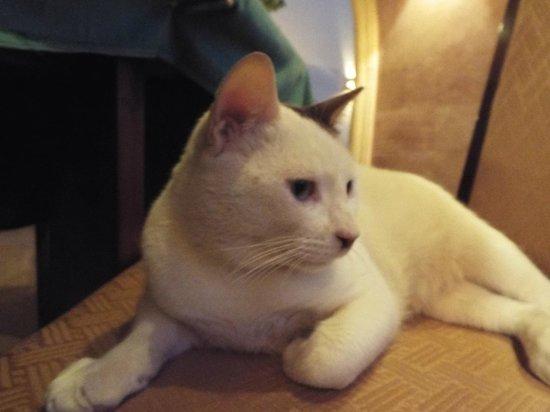 Stella Di Mare Beach Resort & Spa Makadi Bay: Restaurant Cat