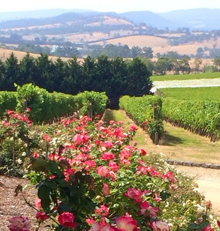 Yarra Valley Private Winery Tours : Stunning scenery at Tokar