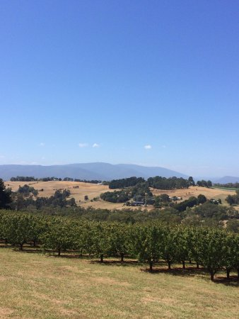 Yarra Valley Private Winery Tours : Scenery from Seville Hill decked area