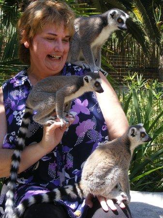 Cango Wildlife Ranch: Lemurs, Lemurs, Lemurs!