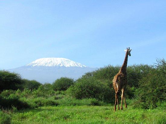 Bruno Safaris - Day Tours: Im Amboseli Nationalpark