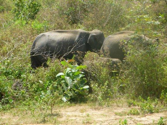 Hotel Mermaid & Club: Elephant Safari