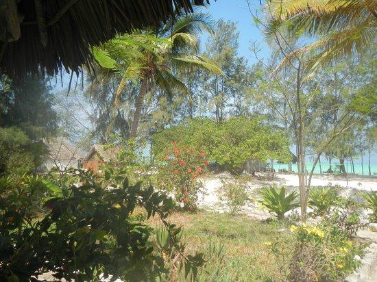 Ndame Beach Lodge Zanzibar: Blick von meiner Terrasse aus