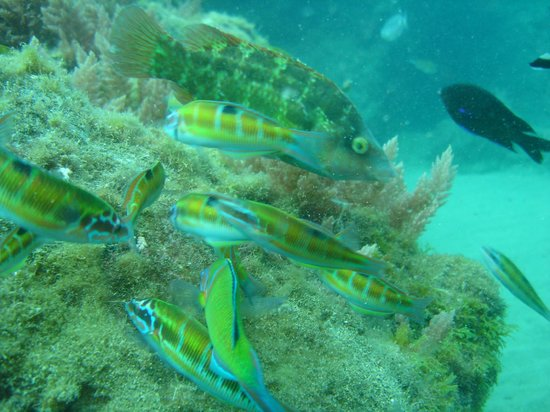 Canary Island Divers Lanzarote: Fish in abundance