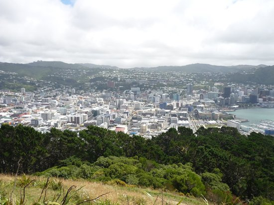 Mount Victoria: scenic views of city
