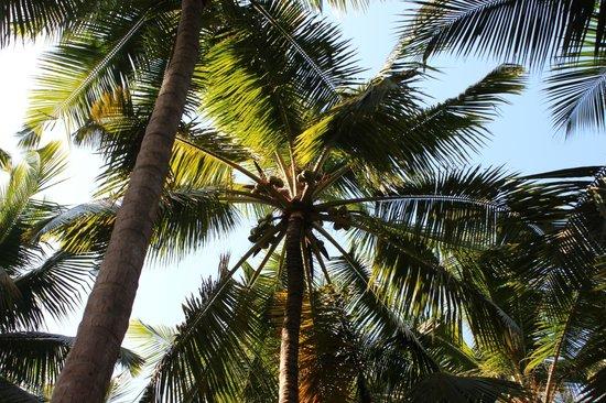 Oceano Pearl : Resort