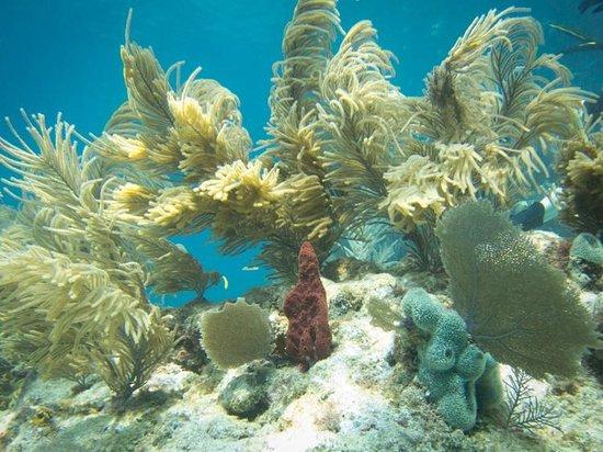 Hall's Diving Center: Sponge Bob and Patrick