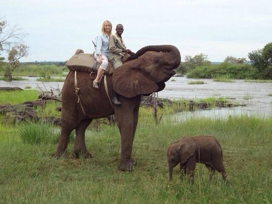 The River Club: Amazing Elephant experience .