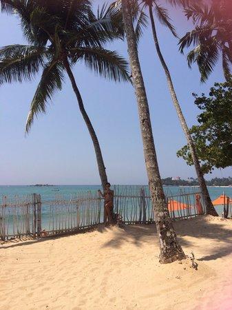 Calamander Unawatuna Beach: Пляж UBR