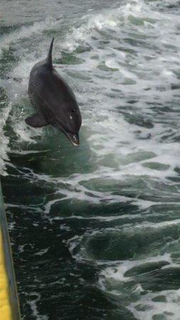 Sea Screamer : Amazing!