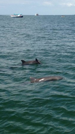 Sea Screamer : Family of dolphins!